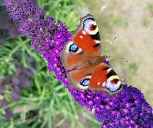 animal, flower, and lilac image