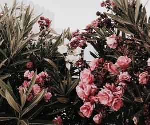 aesthetic, aesthetics, and background image