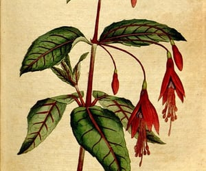 botany, flowers, and pictorial works image