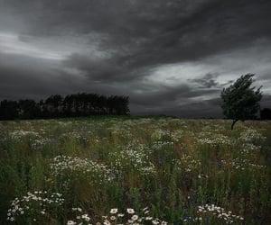 dark, aesthetic, and flowers image