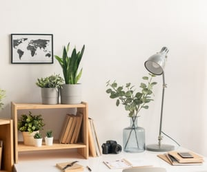 office plants and plants for office image