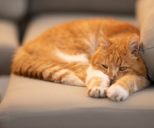 article and cat behaviors image