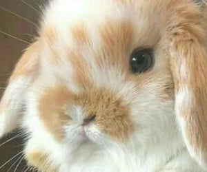 headers, rabbits, and soft image