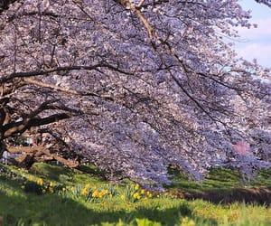 akita, flower, and spring image