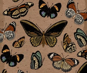 butterfly, background, and pattern image