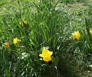 Fleurs and Jaune image