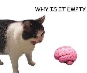 brain, cat, and text image