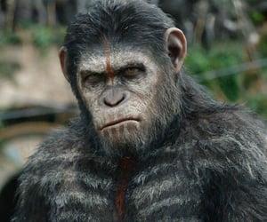 ape, Hot, and simp image