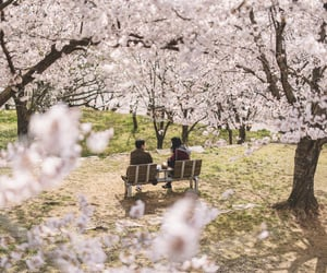 bench, blossom, and castle image