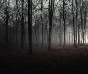 dark, fog, and nature image