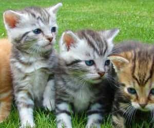 25 Cat Facts For Cat Owners - Pet Trained