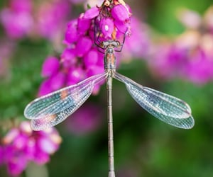 animals, dragonfly, and insects image