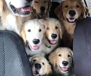 Group Selfi