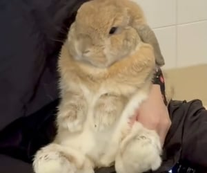 animals, bun, and bunny image
