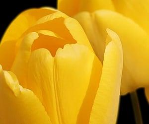 flower, ازهار, and flowers image