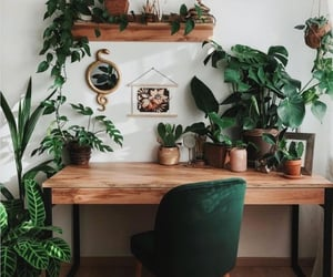 green, plants, and decor image