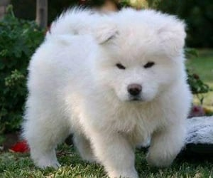 doglover, cute doggy, and cute dog image