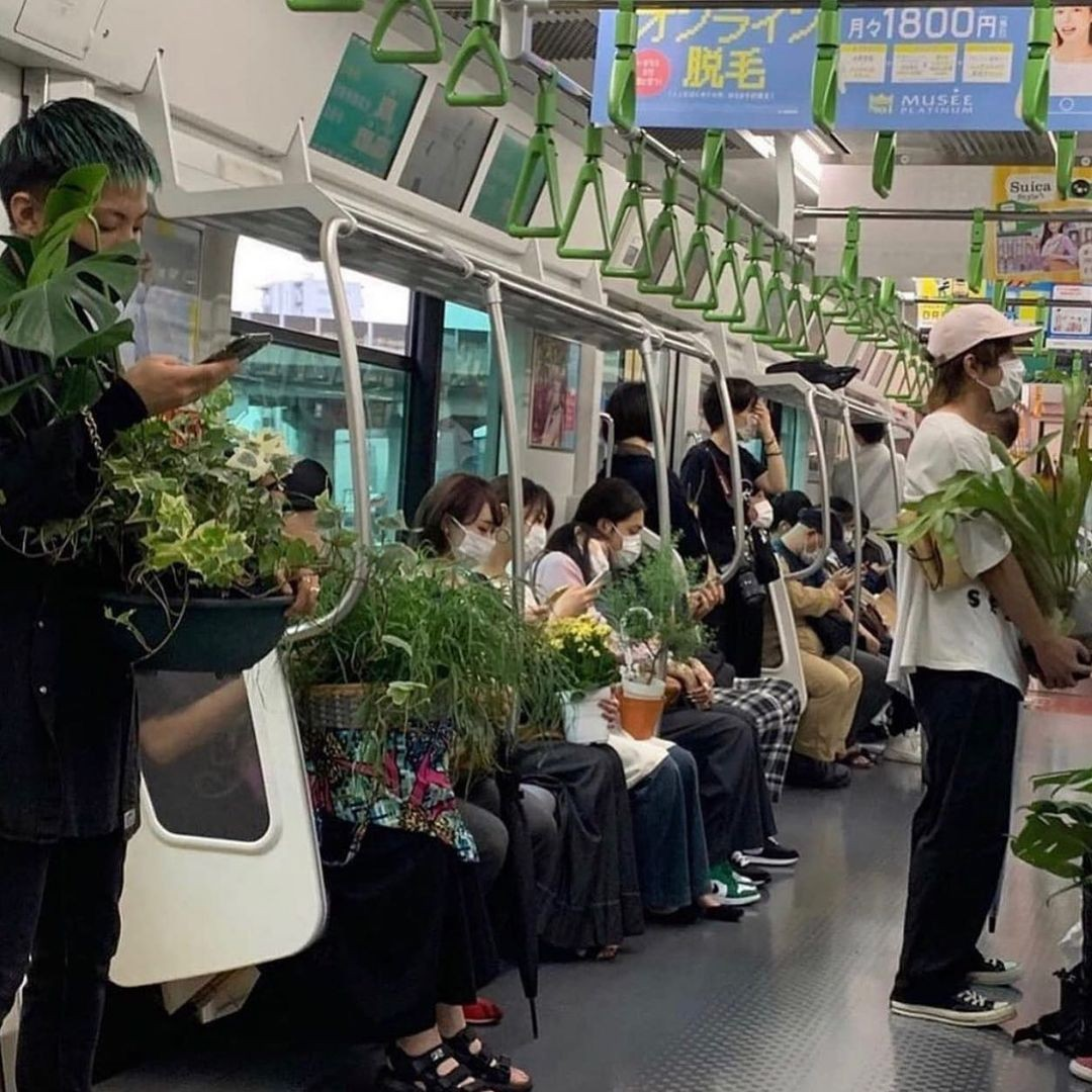 plants, green, and japan image