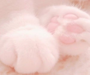 cat, kitty, and paws image