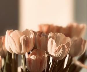 flowers, aesthetics, and minimalism image
