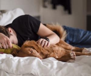 dogs and sleep image