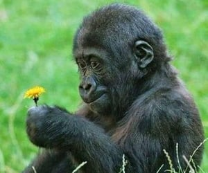 flowers, animal, and monkey image