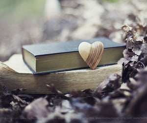 bokeh, book, and forest image
