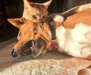 doggie and kitty image