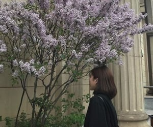 blossoms, flower tree, and scenery image