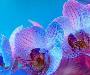 blue, colors, and flower image