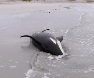 whales animals wildlife image