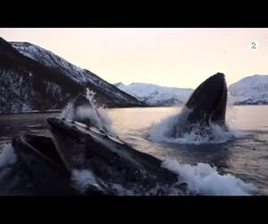 video, amazing, and fjord image
