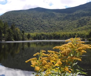 adventure, flowers, and lake image
