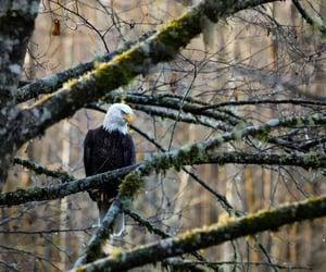bird, eagle, and wildlife image