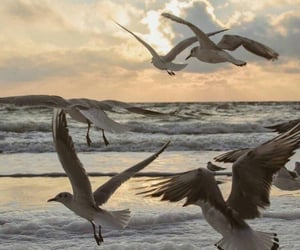 seagull, beach, and ocean image