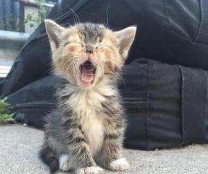 Nap time!  Grrrrrr!