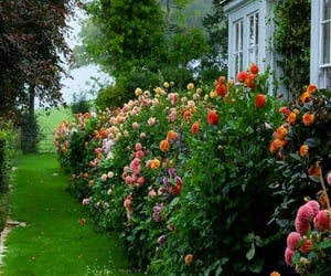 flowers, garden, and beautiful image