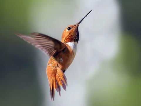 article, birds, and hummingbirds image