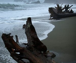 beach, driftwood, and water image