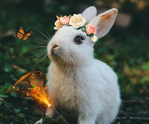 bunny, forest, and white bunny image