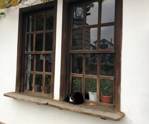 window, cat, and fall image