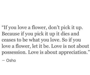 appreciation, flower, and mots image