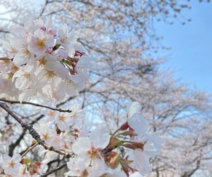 aesthetic, cherry, and flower image