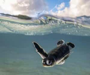 animals, nature, and turtles image