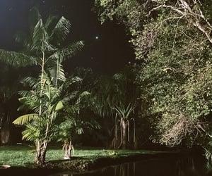 amazonia, night, and stars image