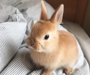 bunny, puppy, and cute image