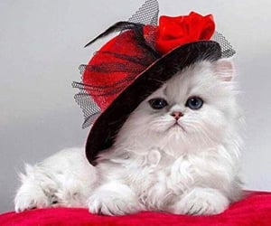beautiful, red hat, and white kitten image