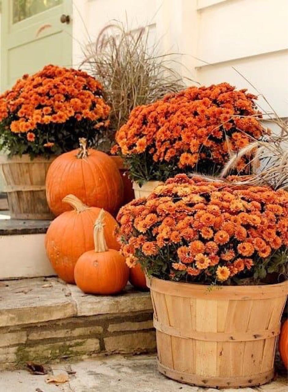 autumn, fall, and 🍂 image