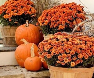 autumn, flower, and fall image
