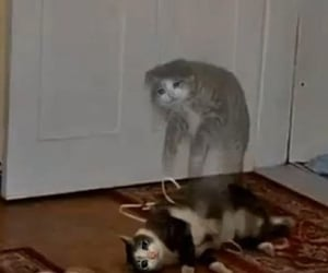 cat, meme, and sad reaction image